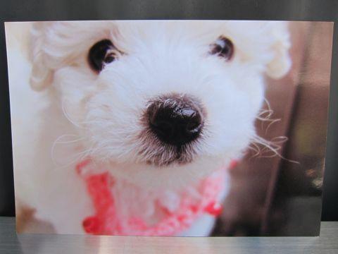 お誕生日バースデーカード犬トリミングバースデー割引トリミングフントヒュッテ文京区ナノオゾンペットシャワー使用トリミングサロン駒込hundehutte東京4.jpg