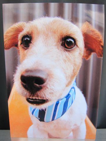 お誕生日バースデーカード犬トリミングバースデー割引トリミングフントヒュッテ文京区ナノオゾンペットシャワー使用トリミングサロン駒込hundehutte東京5.jpg