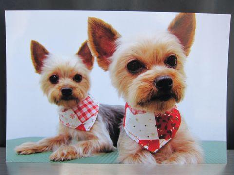 お誕生日バースデーカード犬トリミングバースデー割引トリミングフントヒュッテ文京区ナノオゾンペットシャワー使用トリミングサロン駒込hundehutte東京6.jpg