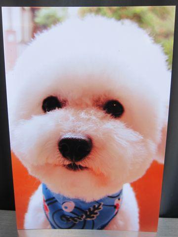 お誕生日バースデーカード犬トリミングバースデー割引トリミングフントヒュッテ文京区ナノオゾンペットシャワー使用トリミングサロン駒込hundehutte東京9.jpg