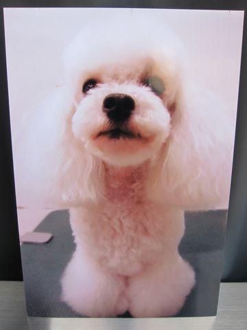 お誕生日バースデーカード犬トリミングバースデー割引トリミングフントヒュッテ文京区ナノオゾンペットシャワー使用トリミングサロン駒込hundehutte東京10.jpg