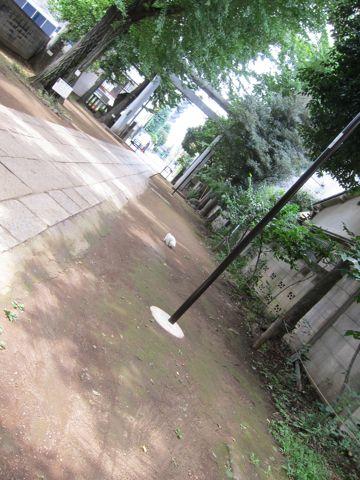ビションフリーゼフントヒュッテ東京関東ビションフリーゼ子犬情報こいぬかわいいかわいいビションフリーゼのいるお店文京区本駒込hundehutte仔犬ビションフリーゼ52.jpg