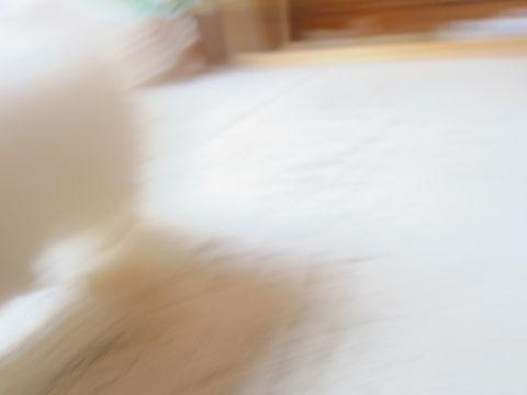 ビションフリーゼフントヒュッテ東京関東ビションフリーゼ子犬情報こいぬかわいいかわいいビションフリーゼのいるお店文京区本駒込hundehutte仔犬ビションフリーゼ129.jpg