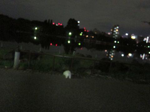 ビションフリーゼフントヒュッテ東京関東ビションフリーゼ子犬情報こいぬかわいいかわいいビションフリーゼのいるお店文京区本駒込hundehutte仔犬ビションフリーゼ234.jpg