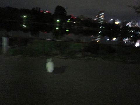 ビションフリーゼフントヒュッテ東京関東ビションフリーゼ子犬情報こいぬかわいいかわいいビションフリーゼのいるお店文京区本駒込hundehutte仔犬ビションフリーゼ235.jpg