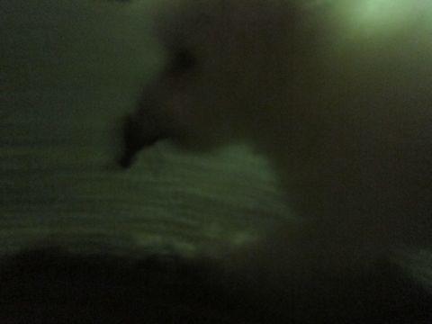 ビションフリーゼフントヒュッテ東京関東ビションフリーゼ子犬情報こいぬかわいいかわいいビションフリーゼのいるお店文京区本駒込hundehutte仔犬ビションフリーゼ246.jpg