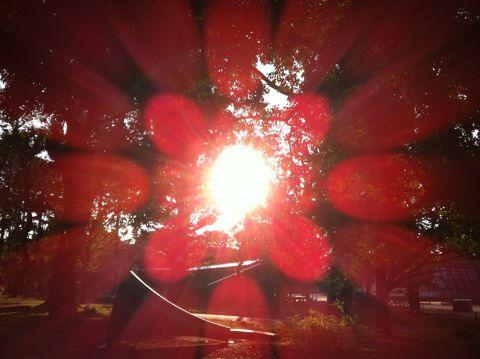 犬おさんぽ上野公園上野恩賜公園不忍池辯天堂上野弁天堂上野公園上野動物園パンダ上野公園から見えるスカイツリー上野公園ボート池スワンボートデートスポット上野28.jpg