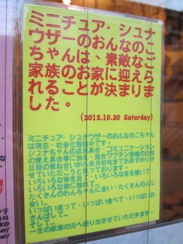 ミニチュア・シュナウザーこいぬ子犬仔犬ミニチュアシュナウザー東京フントヒュッテシュナウザーの子犬文京区本駒込hundehutteソルトアンドペッパーかわいいシュナ187.jpg