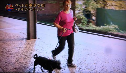 地球イチバン 地球でイチバン ペットが幸せな街 ドイツ・ベルリン ノーリード 電車に乗れる 犬は同僚 動物保護法 犬の保護に関する規則 犬の社会化 2.jpg