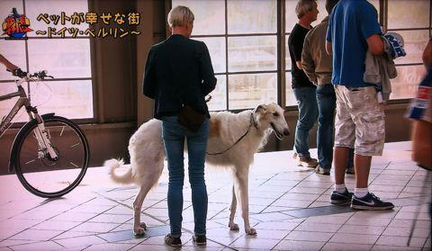 地球イチバン 地球でイチバン ペットが幸せな街 ドイツ・ベルリン ノーリード 電車に乗れる 犬は同僚 動物保護法 犬の保護に関する規則 犬の社会化 3.jpg