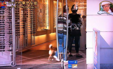 地球イチバン 地球でイチバン ペットが幸せな街 ドイツ・ベルリン ノーリード 電車に乗れる 犬は同僚 動物保護法 犬の保護に関する規則 犬の社会化 4.jpg
