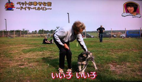 地球イチバン 地球でイチバン ペットが幸せな街 ドイツ・ベルリン ノーリード 電車に乗れる 犬は同僚 動物保護法 犬の保護に関する規則 犬の社会化 8.jpg