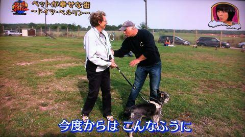 地球イチバン 地球でイチバン ペットが幸せな街 ドイツ・ベルリン ノーリード 電車に乗れる 犬は同僚 動物保護法 犬の保護に関する規則 犬の社会化 10.jpg