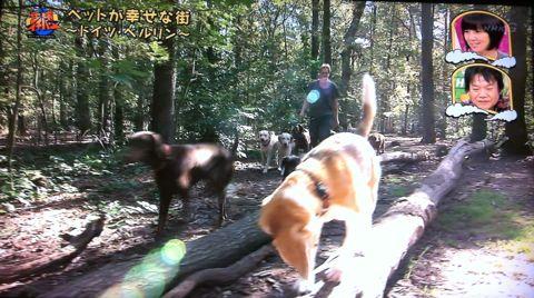 地球イチバン 地球でイチバン ペットが幸せな街 ドイツ・ベルリン ノーリード 電車に乗れる 犬は同僚 動物保護法 犬の保護に関する規則 犬の社会化 14.jpg