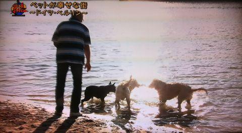 地球イチバン 地球でイチバン ペットが幸せな街 ドイツ・ベルリン ノーリード 電車に乗れる 犬は同僚 動物保護法 犬の保護に関する規則 犬の社会化 18.jpg