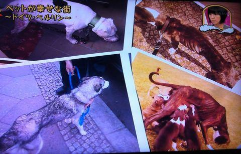 地球イチバン 地球でイチバン ペットが幸せな街 ドイツ・ベルリン ノーリード 電車に乗れる 犬は同僚 動物保護法 犬の保護に関する規則 犬の社会化 41.jpg