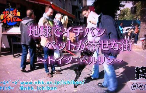 地球イチバン 地球でイチバン ペットが幸せな街 ドイツ・ベルリン ノーリード 電車に乗れる 犬は同僚 動物保護法 犬の保護に関する規則 犬の社会化 46.jpg