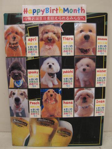 ハッピーバースデーボード作成フントヒュッテ犬お誕生日お誕生月ハッピーバースデーマンスわんこバースデー割引トリミングカットモデルhundehuttehundeh�tte1.jpg
