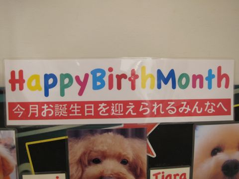 ハッピーバースデーボード作成フントヒュッテ犬お誕生日お誕生月ハッピーバースデーマンスわんこバースデー割引トリミングカットモデルhundehuttehundeh�tte2.jpg