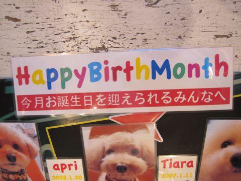 ハッピーバースデーボード作成フントヒュッテ犬お誕生日お誕生月ハッピーバースデーマンスわんこバースデー割引トリミングカットモデルhundehuttehundeh�tte5.jpg