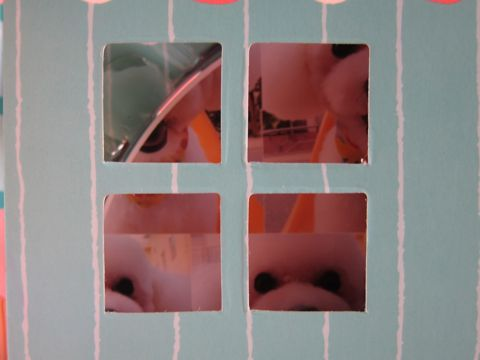 ビションフリーゼトリミング文京区フントヒュッテナノオゾンペットシャワー使用トリミングサロン東京ビションフリーゼカットスタイル犬ハーブパック効果17.jpg