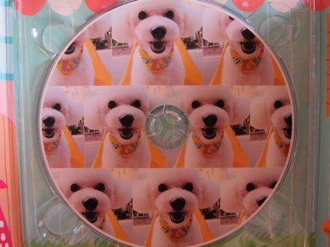 ビションフリーゼトリミング文京区フントヒュッテナノオゾンペットシャワー使用トリミングサロン東京ビションフリーゼカットスタイル犬ハーブパック効果19.jpg