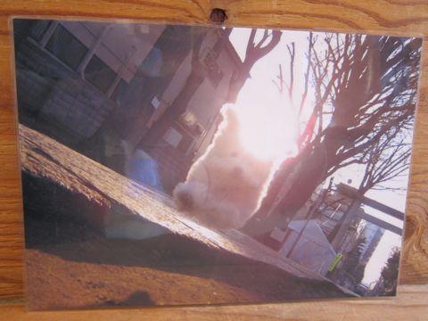 ビションフリーゼトリミング文京区フントヒュッテナノオゾンペットシャワー使用トリミングサロン東京ビションフリーゼカットスタイル犬ハーブパック効果39.jpg