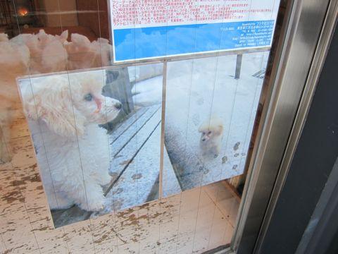 プードルフントヒュッテ東京トイプードルかわいい子犬こいぬ文京区本駒込hundehutte仔犬プードルショータイプブリーダープードルカットトイプードル画像240.jpg