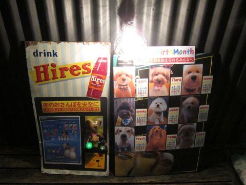 NITE IZE SPOTLIT LED ナイトアイズ スポットライト LEDライト 犬用おさんぽグッズ 夜のおさんぽ 夜道 暗い 犬 バースデーボード作成フントヒュッテ 9.jpg