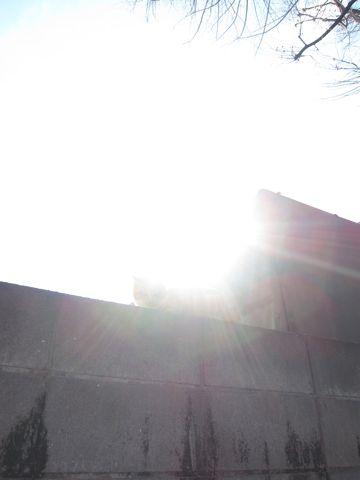 プードルフントヒュッテ東京トイプードルかわいい子犬こいぬ文京区本駒込hundehutte仔犬プードルショータイプブリーダープードルカットトイプードル画像295.jpg