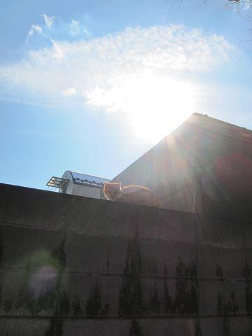プードルフントヒュッテ東京トイプードルかわいい子犬こいぬ文京区本駒込hundehutte仔犬プードルショータイプブリーダープードルカットトイプードル画像296.jpg