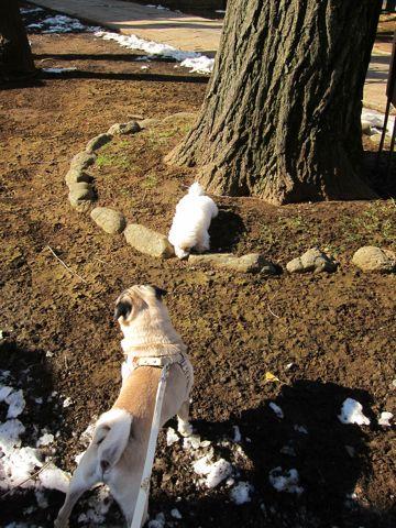 プードルフントヒュッテ東京トイプードルかわいい子犬こいぬ文京区本駒込hundehutte仔犬プードルショータイプブリーダープードルカットトイプードル画像301.jpg