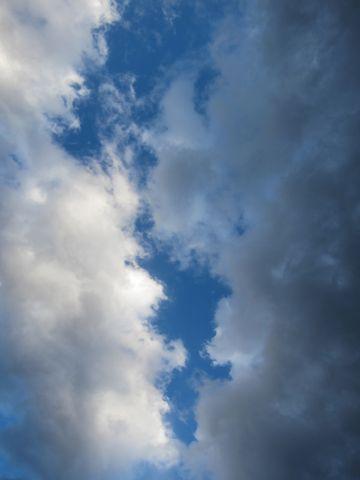 プードルフントヒュッテ東京トイプードルかわいい子犬こいぬ文京区本駒込hundehutte仔犬プードルショータイプブリーダープードルカットトイプードル画像309.jpg