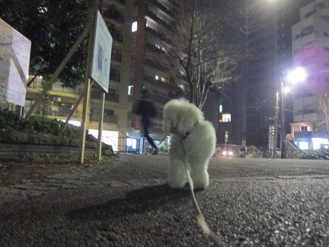 プードルフントヒュッテ東京トイプードルかわいい子犬こいぬ文京区本駒込hundehutte仔犬プードルショータイプブリーダープードルカットトイプードル画像353.jpg