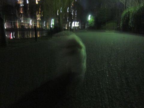 プードルフントヒュッテ東京トイプードルかわいい子犬こいぬ文京区本駒込hundehutte仔犬プードルショータイプブリーダープードルカットトイプードル画像362.jpg