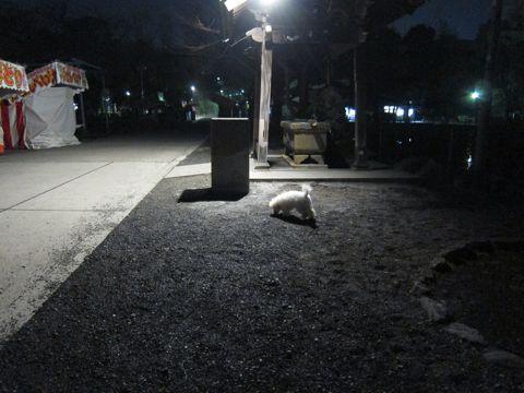 プードルフントヒュッテ東京トイプードルかわいい子犬こいぬ文京区本駒込hundehutte仔犬プードルショータイプブリーダープードルカットトイプードル画像376.jpg