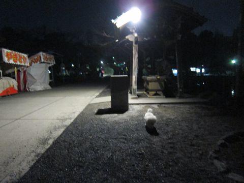 プードルフントヒュッテ東京トイプードルかわいい子犬こいぬ文京区本駒込hundehutte仔犬プードルショータイプブリーダープードルカットトイプードル画像377.jpg