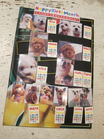 ハッピーバースデーボード作成DIY店作りDo it yourselfフントヒュッテ犬お誕生日わんこお誕生月ハッピーバースデーマンスわんこバースデー割引トリミングhundehutte2.jpg