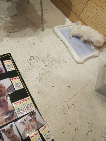 ハッピーバースデーボード作成DIY店作りDo it yourselfフントヒュッテ犬お誕生日わんこお誕生月ハッピーバースデーマンスわんこバースデー割引トリミングhundehutte4.jpg