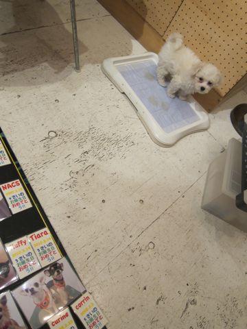 ハッピーバースデーボード作成DIY店作りDo it yourselfフントヒュッテ犬お誕生日わんこお誕生月ハッピーバースデーマンスわんこバースデー割引トリミングhundehutte5.jpg