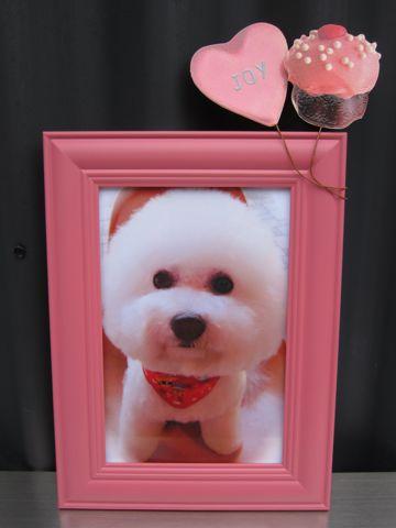 ビションフリーゼトリミング文京区フントヒュッテビションかわいい子犬ナノオゾンペットシャワー使用トリミングサロン都内ビションカット犬ハーブパック効果g.jpg