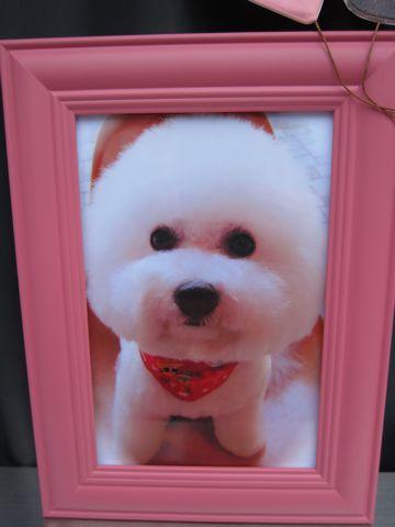 ビションフリーゼトリミング文京区フントヒュッテビションかわいい子犬ナノオゾンペットシャワー使用トリミングサロン都内ビションカット犬ハーブパック効果i.jpg