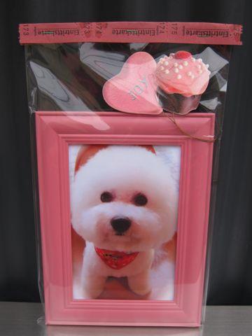 ビションフリーゼトリミング文京区フントヒュッテビションかわいい子犬ナノオゾンペットシャワー使用トリミングサロン都内ビションカット犬ハーブパック効果k.jpg