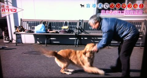 探検バクモン 盲導犬でワンダフル! 日本盲導犬協会 神奈川訓練センター センターの優等生マルク 伝説の盲導犬訓練士 盲導犬は、全国で1043頭しかいない。 1.jpg