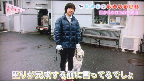 探検バクモン 盲導犬でワンダフル! 日本盲導犬協会 神奈川訓練センター センターの優等生マルク 伝説の盲導犬訓練士 盲導犬は、全国で1043頭しかいない。 2.jpg