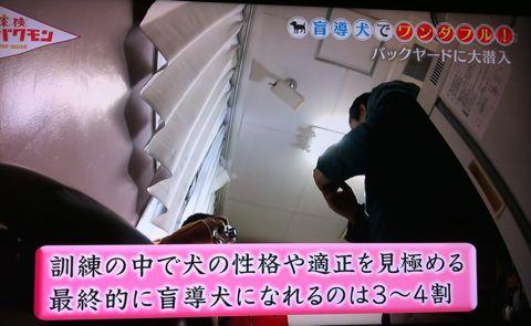 探検バクモン 盲導犬でワンダフル! 日本盲導犬協会 神奈川訓練センター センターの優等生マルク 伝説の盲導犬訓練士 盲導犬は、全国で1043頭しかいない。 5.jpg