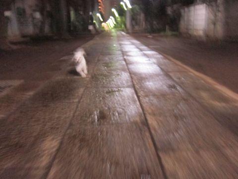 プードルフントヒュッテ東京トイプードルかわいい子犬こいぬ文京区本駒込hundehutte仔犬プードルショータイプブリーダープードルカットトイプードル画像555.jpg