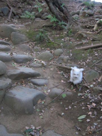 プードルフントヒュッテ東京トイプードルかわいい子犬こいぬ文京区本駒込hundehutte仔犬プードルショータイプブリーダープードルカットトイプードル画像668.jpg