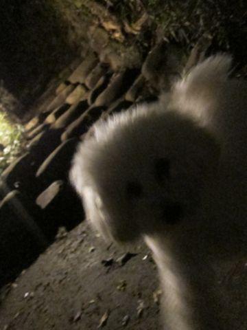 プードルフントヒュッテ東京トイプードルかわいい子犬こいぬ文京区本駒込hundehutte仔犬プードルショータイプブリーダープードルカットトイプードル画像769.jpg