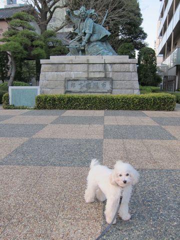 プードルフントヒュッテ東京トイプードルかわいい子犬こいぬ文京区本駒込hundehutte仔犬プードルショータイプブリーダープードルカットトイプードル画像829.jpg
